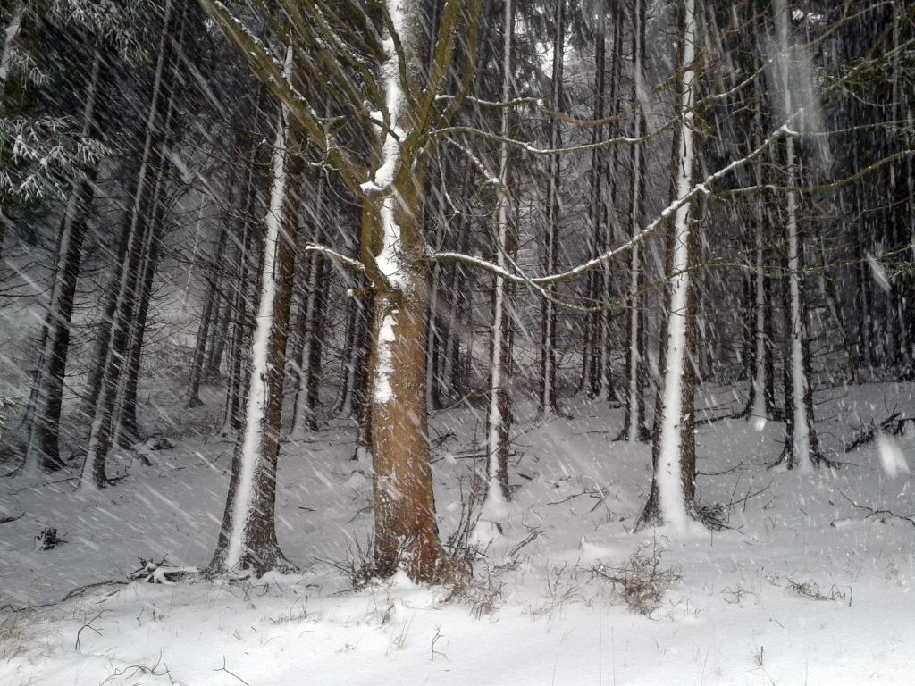 Bäume im Schneesturm