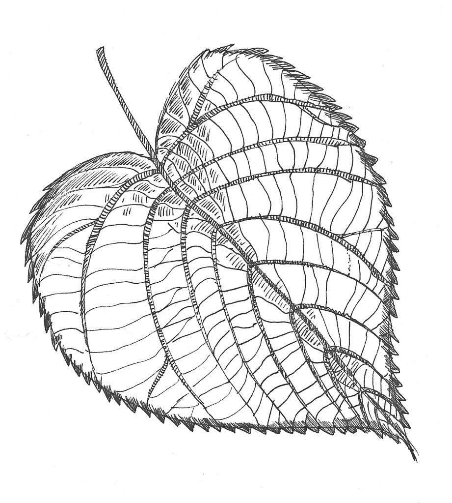 Lindenblatt gezeichnet (Tala T.)